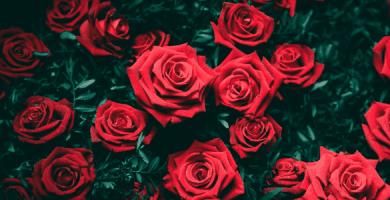 Hintergrundbilder von Pflanzen und Blumen