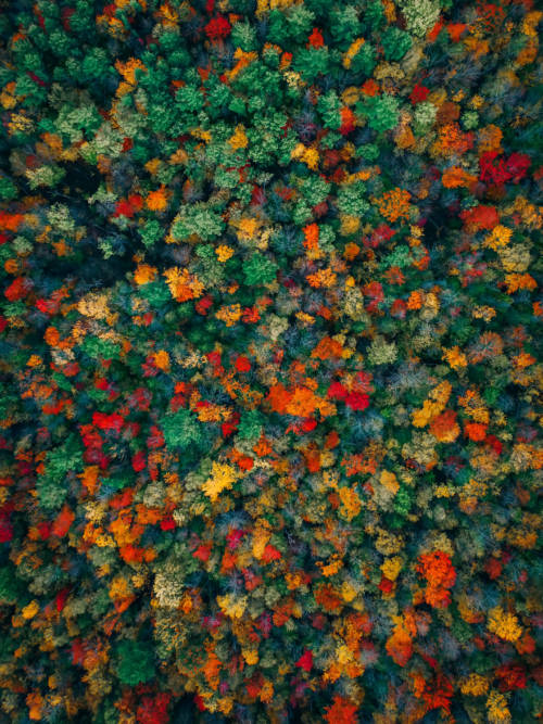 Aerial view of the autumn wallpaper