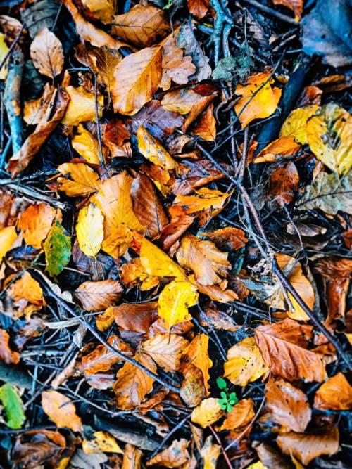 Fond d'écran de Feuilles d'automne