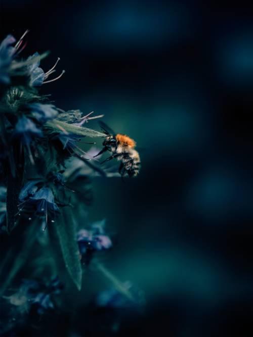 Fond d'écran de Abeille sur une fleur