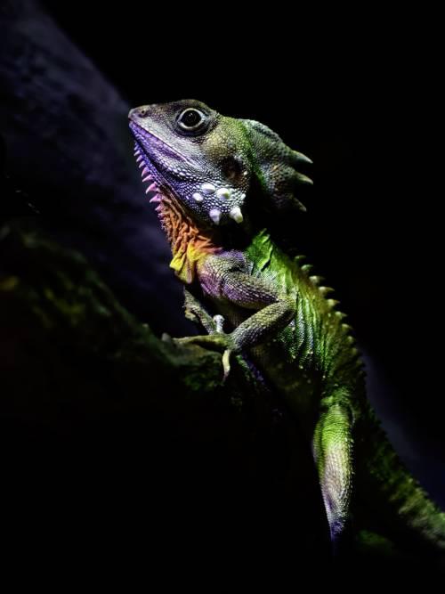 Fondo de pantalla de Dragón del bosque de Boyd