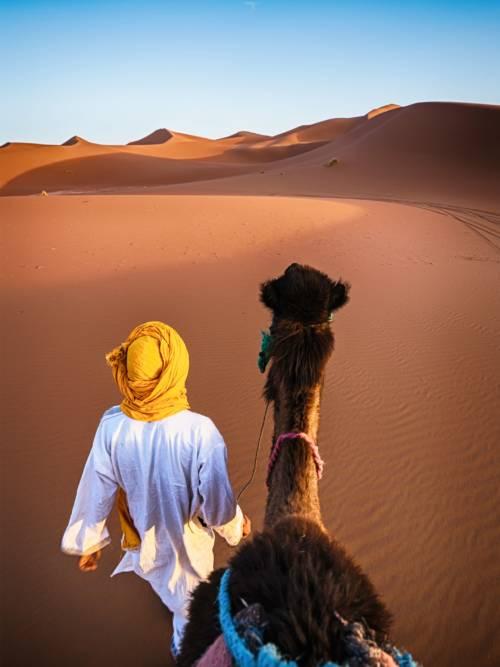 Papel de parede do Camelo no deserto do Saara para celulares e tablets