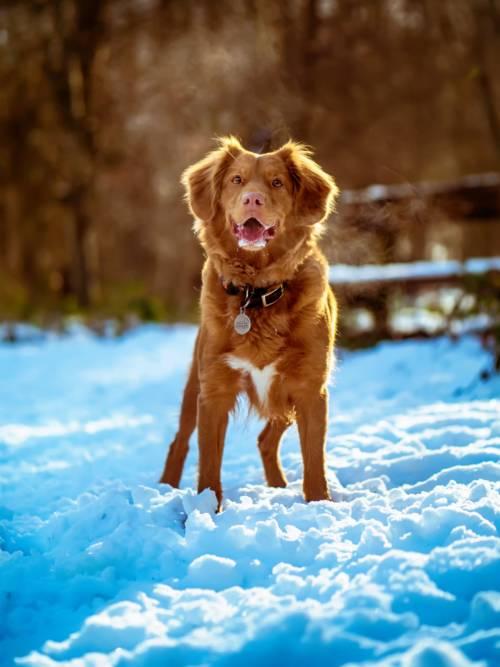 Fondo de pantalla de Perro en la nieve
