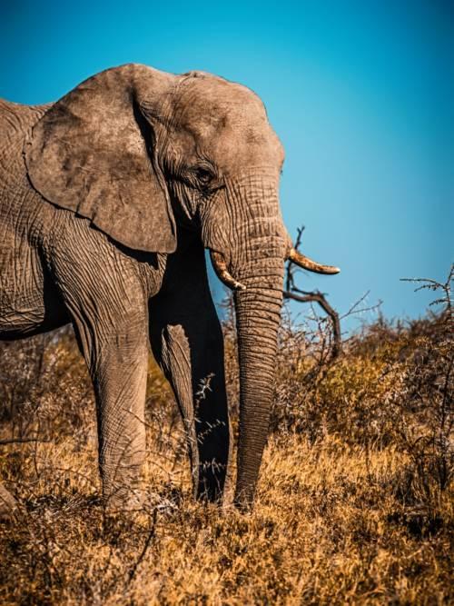 Fondo de pantalla de Elefante en el Parque Nacional de Etosha para móviles y tablets