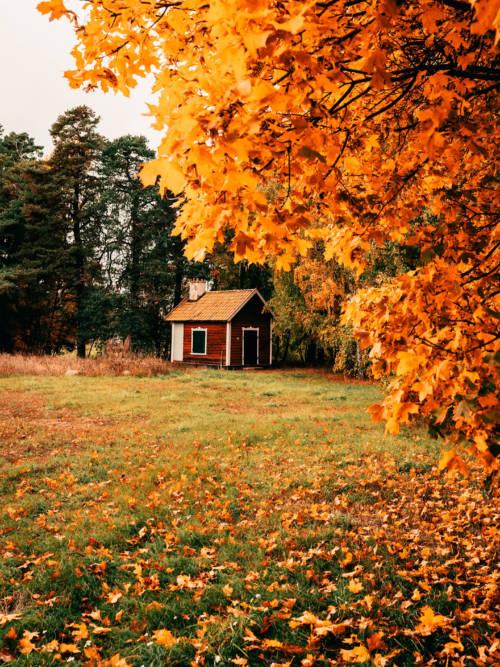 Fondo de pantalla de Campo en otoño