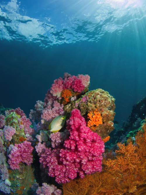 Papel de parede de Peixe em recife de coral