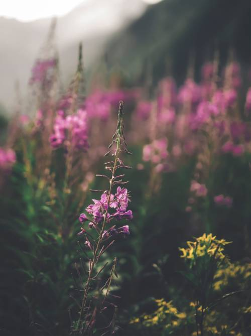 Wald Wildblumen wallpaper