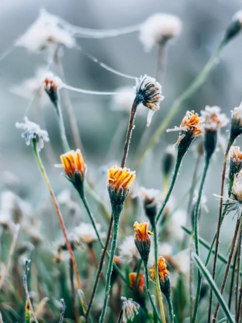 Frostige Blumen wallpaper