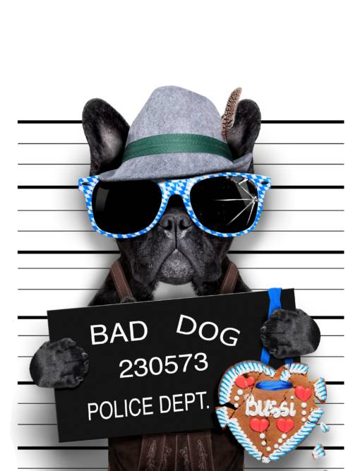 Funny bad dog wallpaper
