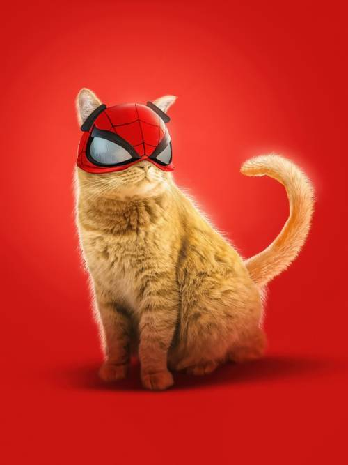 Funny Spider-Cat wallpaper