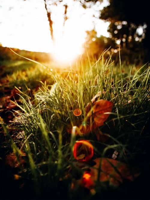 Fondo de pantalla de Primer plano de hierba
