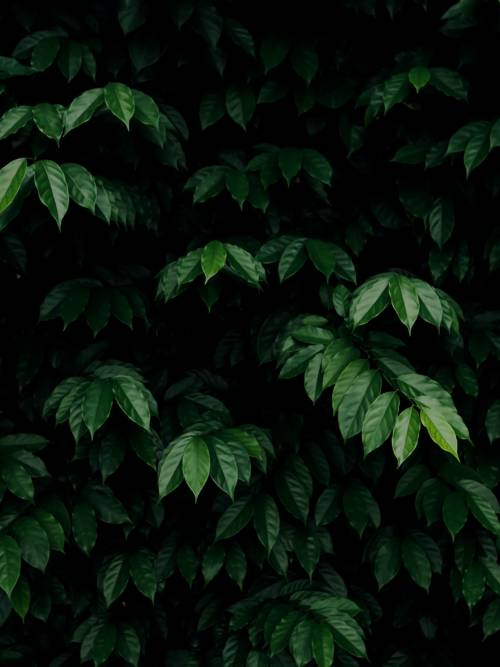Green leaves bush wallpaper