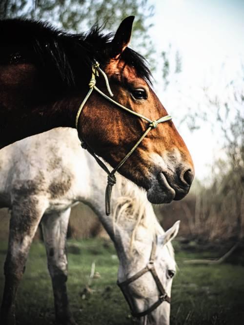 Pferde Wallpaper für Handys und Tablets
