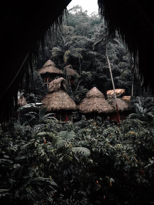 Fond d'écran de Cabane dans les arbres de la jungle