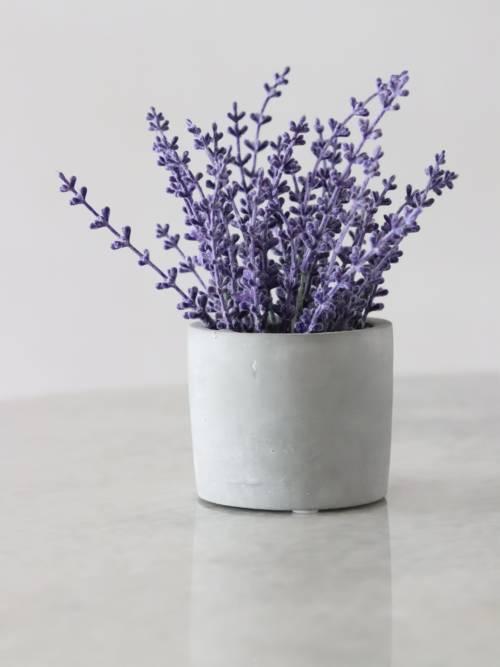 Lavendel wallpaper