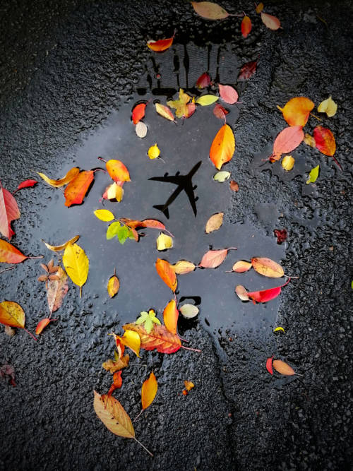Leaves in puddle wallpaper