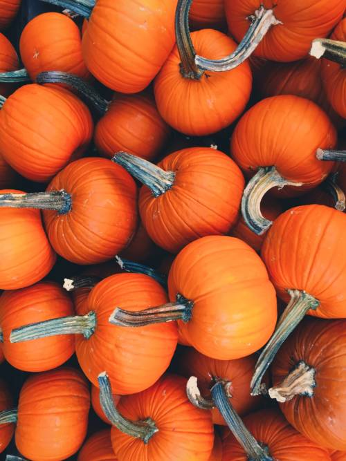 Lots of pumpkins wallpaper