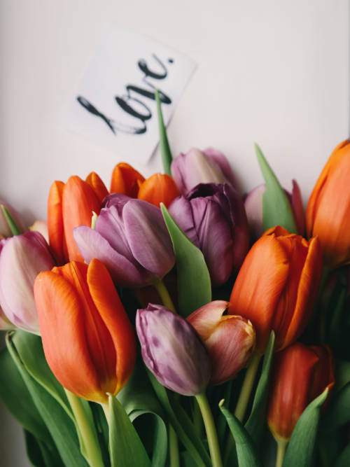 Love tulips wallpaper
