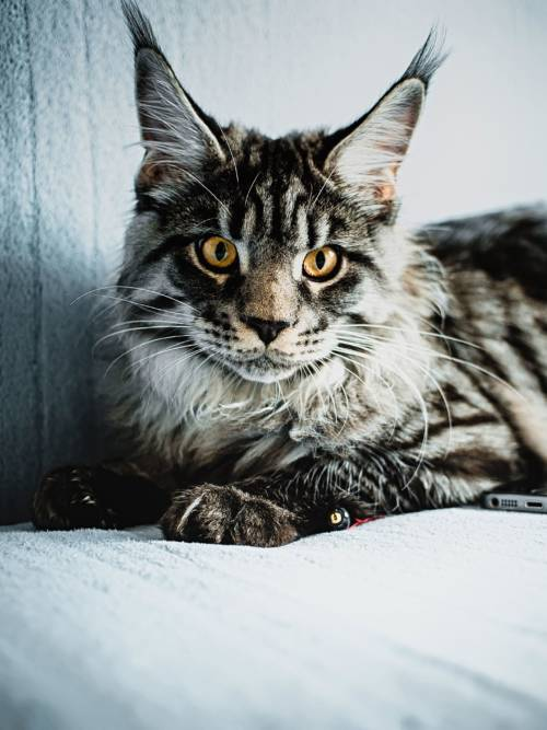 Beobachter Katze wallpaper