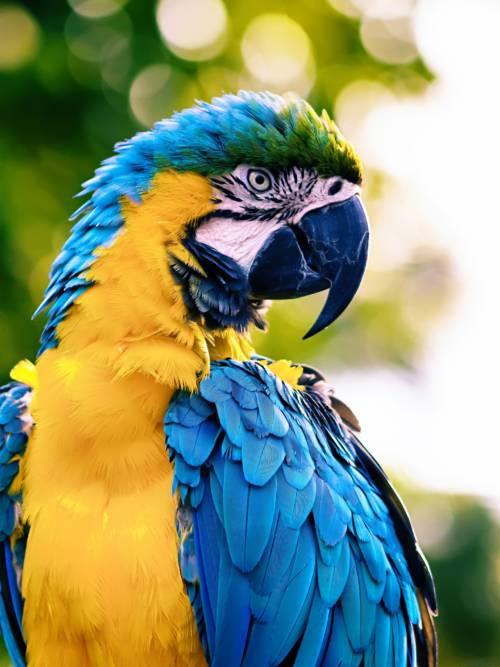 Papagei Wallpaper für Handys und Tablets