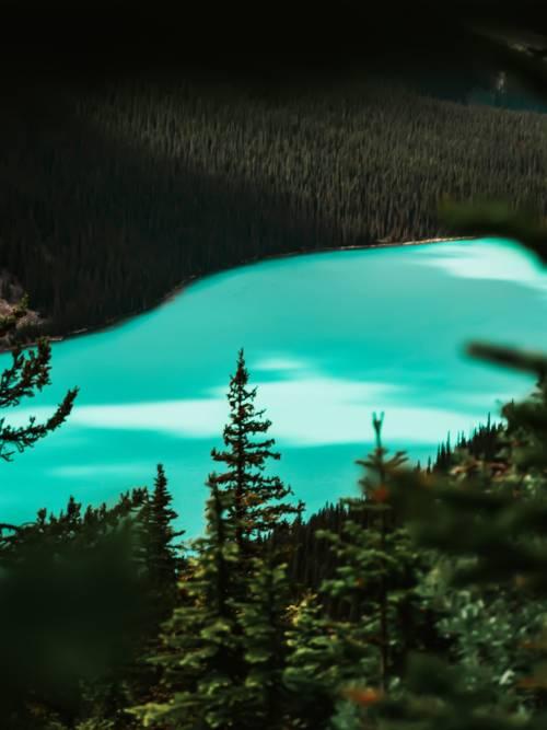 Fond d'écran de Lac Peyto