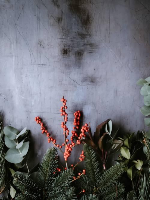 Fond d'écran de Plantes sur le mur
