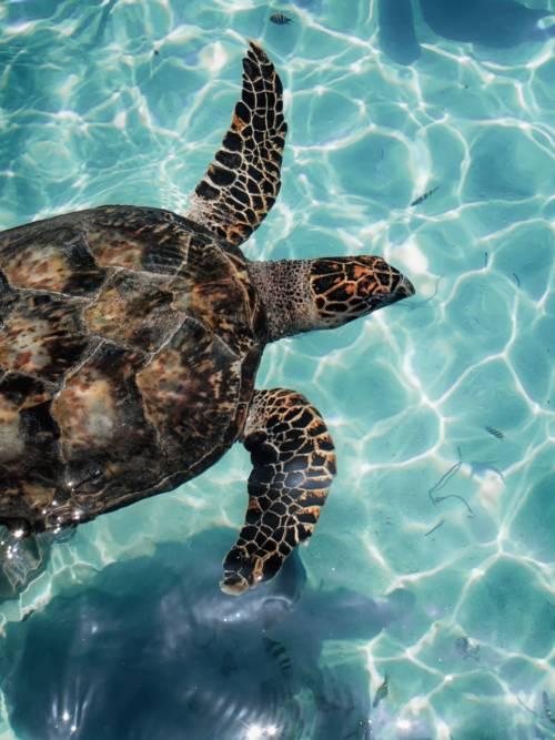Papel de parede de Tartaruga marinha