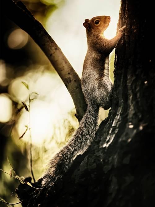 Fondo de pantalla de Ardilla trepando al árbol