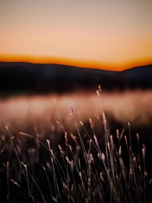 Sonnenaufgang auf dem Feld Wallpaper für Handys und Tablets