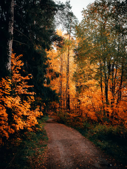 Trail im Herbst wallpaper