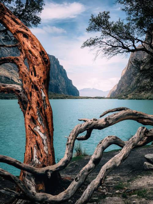 Baum im See wallpaper
