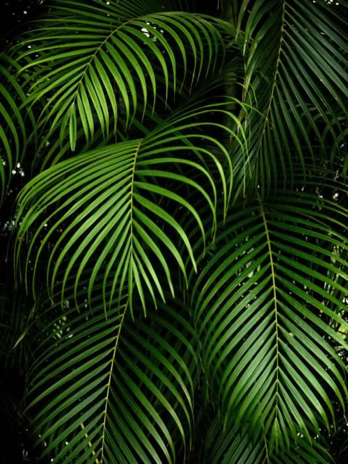 Fond d'écran de Jardin botanique tropical