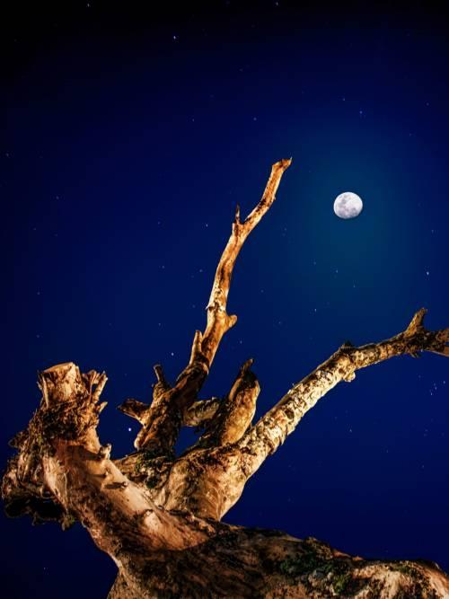 Fond d'écran de Tronc sous la lune