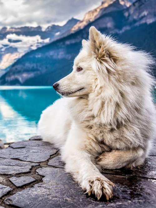 Fondo de pantalla de Perro blanco