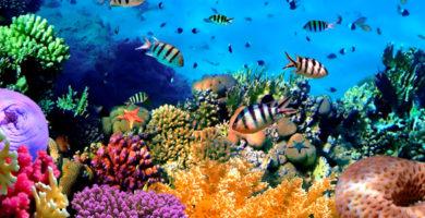 Fonds d'écran océanique